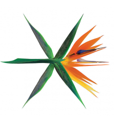 Exo-CD-vol-4 -The war- CD-di-kpop